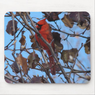 Male Northern Cardinal&Bradford Pear Mouse Pad