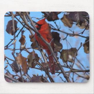 Male Northern Cardinal&Bradford Pear Mouse Mats