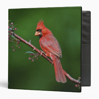 Male Northern Cardinal, Cardinalis Binder