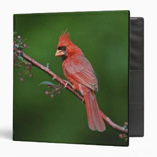 Male Northern Cardinal, Cardinalis 3 Ring Binders