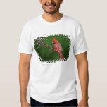 Male Northern Cardinal, Cardinalis T Shirt