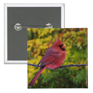 Male Northern Cardinal in autumn, Cardinalis 2 Inch Square Button