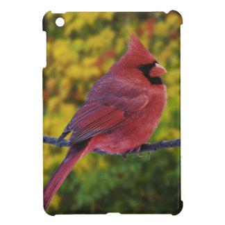 Male Northern Cardinal in autumn, Cardinalis Cover For The iPad Mini