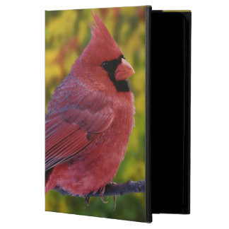 Male Northern Cardinal in autumn, Cardinalis iPad Air Cover
