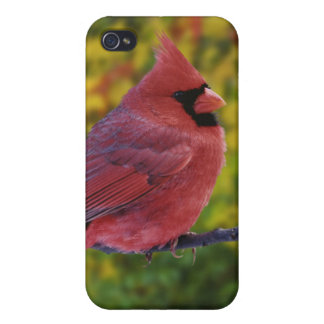 Male Northern Cardinal in autumn, Cardinalis iPhone 4/4S Case