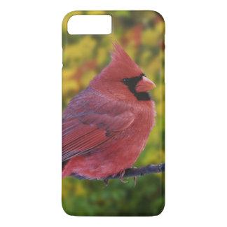 Male Northern Cardinal in autumn, Cardinalis iPhone 8 Plus/7 Plus Case