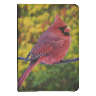 Male Northern Cardinal in autumn, Cardinalis Kindle 4 Cover