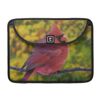 Male Northern Cardinal in autumn, Cardinalis MacBook Pro Sleeve
