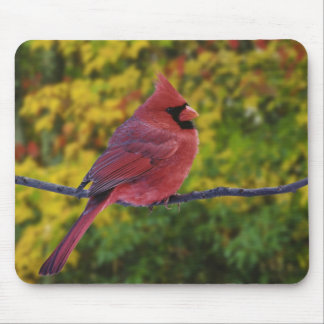 Male Northern Cardinal in autumn, Cardinalis Mouse Pad