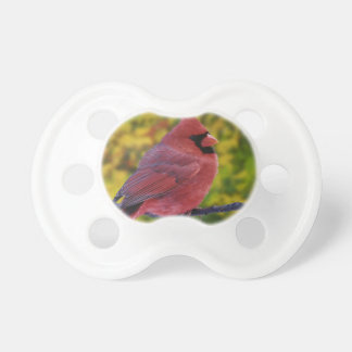 Male Northern Cardinal in autumn, Cardinalis Pacifier
