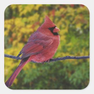 Male Northern Cardinal in autumn, Cardinalis Stickers