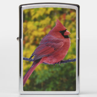 Male Northern Cardinal in autumn, Cardinalis Zippo Lighter