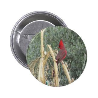 Male Northern Cardinal on Corn Tassel 2 Inch Round Button