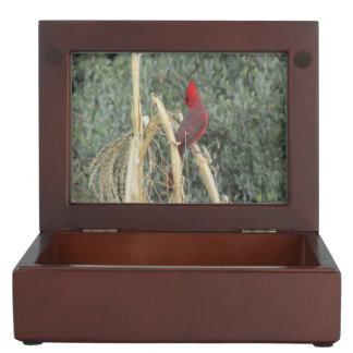 Male Northern Cardinal on Corn Tassel Memory Box