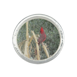 Male Northern Cardinal on Corn Tassel Rings