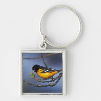 Male Northern Oriole, formerly Baltimore Oriole Keychain