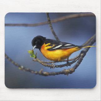 Male Northern Oriole, formerly Baltimore Oriole Mouse Pad