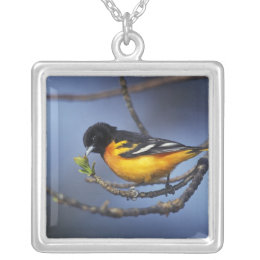 Male Northern Oriole, formerly Baltimore Oriole Silver Plated Necklace