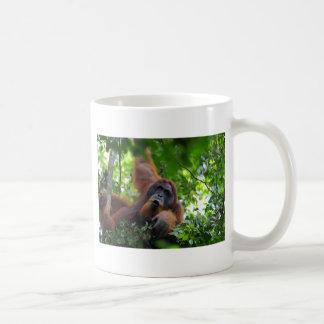 Male orangutan in nest Gunung Leuser National Park Coffee Mug