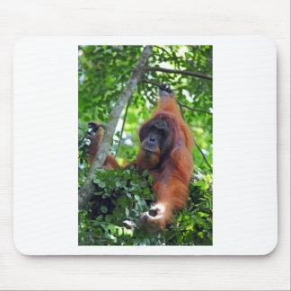 Male orangutan in nest Sumatra rainforest Mouse Pad