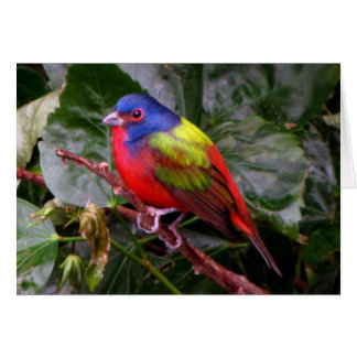Male Painted Bunting Cards
