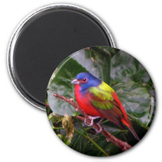 Male Painted Bunting Magnet