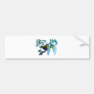 Male Paradise Bird Bumper Sticker