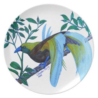 Male Paradise Bird Plate