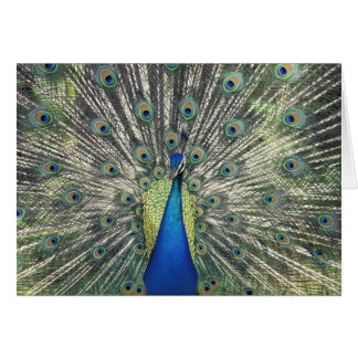 Male Peacock displaying (Pavo cristatus) Greeting Cards