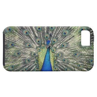 Male Peacock displaying (Pavo cristatus) iPhone SE/5/5s Case