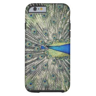 Male Peacock displaying (Pavo cristatus) Tough iPhone 6 Case