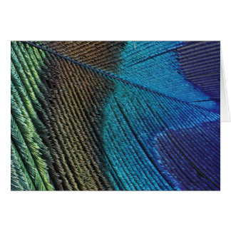 Male peacock feather detail cards