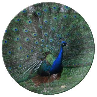 Male Peacock Peafowl Paon Bird displaying plumage Porcelain Plates