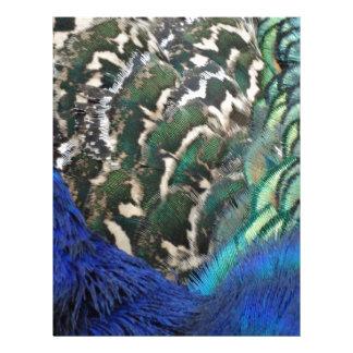 Male Peacock Side Feathers Letterhead