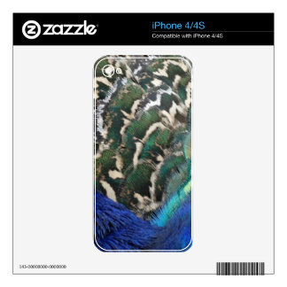 Male Peacock Side Feathers iPhone 4 Decal