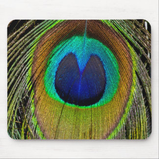 Male peacock tail feathers mouse pad