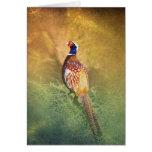 Male Pheasant Greetings Card