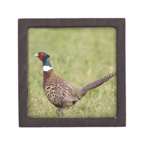 Male Pheasant in Montana Premium Trinket Box