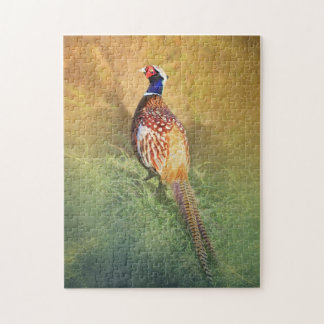 Male Pheasant Jigsaw Puzzle