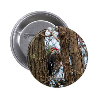 Male Pileated Woodpecker Button