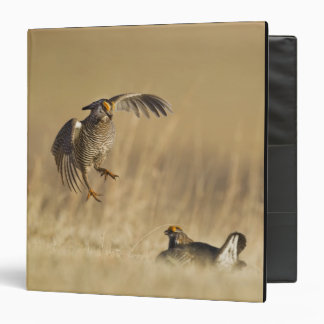 Male prairie chickens at lek in Loup County 3 Ring Binder