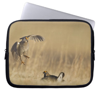 Male prairie chickens at lek in Loup County Laptop Sleeve