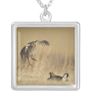 Male prairie chickens at lek in Loup County Silver Plated Necklace