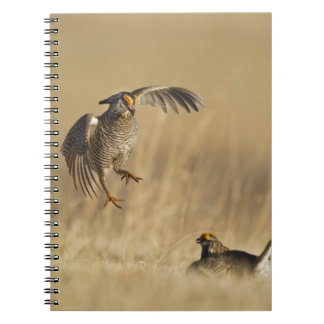 Male prairie chickens at lek in Loup County Spiral Notebook