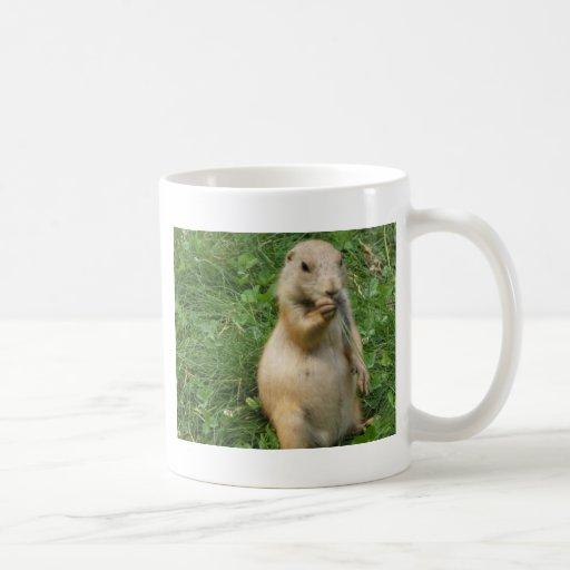 Male Prairie Dog Takes In The Scene On His Hind Le Classic White Coffee Mug