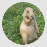 Male Prairie Dog Takes In The Scene On His Hind Le Round Sticker