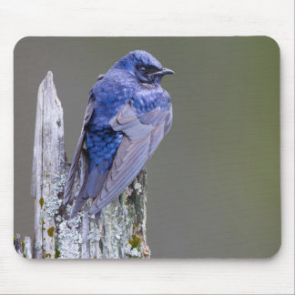 Male Purple Martin nest over Lake Sammamish Mouse Pad
