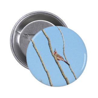 Male Pyrrhuloxia 2 Inch Round Button