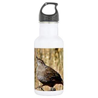 MALE QUAIL ON A FENCE STAINLESS STEEL WATER BOTTLE