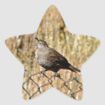 MALE QUAIL ON A FENCE STICKERS